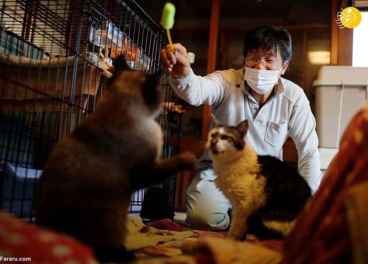 گربههای فراموش شده فوکوشیما نجات یافتند+عکسها