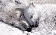 جانوران چه زمانی از خواب زمستانی برمیخیزند؟