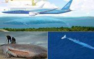 بزرگترین موجود زنده دنیا به اندازه یک هواپیمای بوئینگ