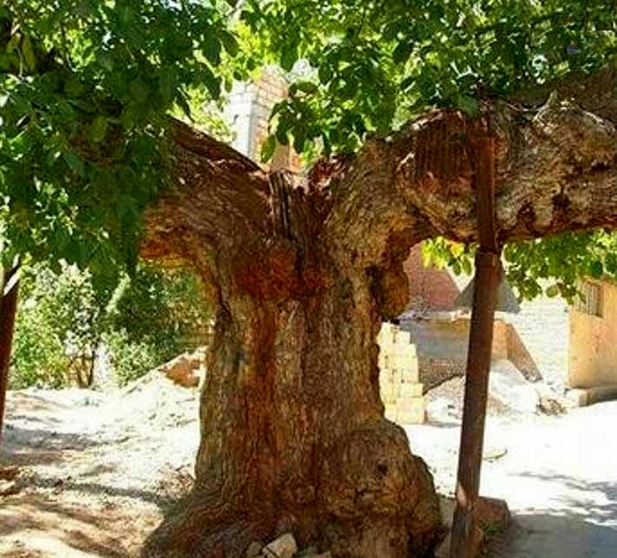 تصویر کمان رستم! در شهمیرزاد استان سمنان