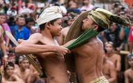جشنواره مبارزه با شاخههای کاکتوس/تصاویر