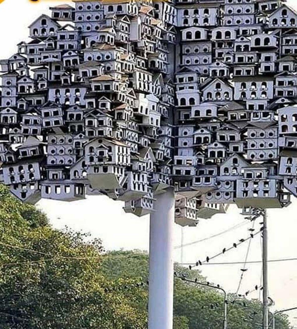 ساخت لانه مخصوص پرنده ها در پاکستان!