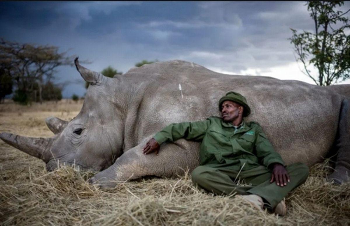 منطقه حفاظت شده کرگدنها در کنیا+عکس