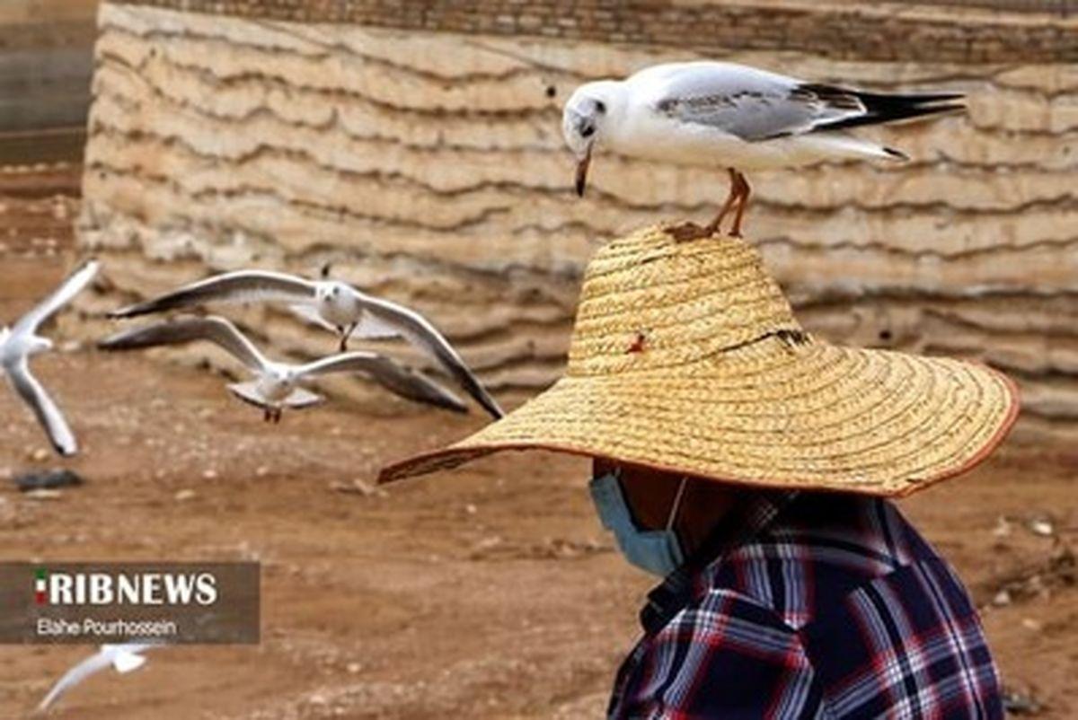 تصاویر دل انگیز از مهاجرت پرندگان سیبری و روسیه به شیراز