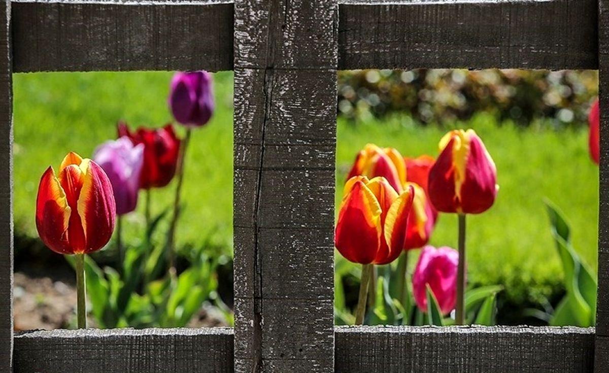 تصاویر حیرت انگیز از باغ گلها در کرج