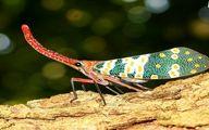 حشراتی که خودشان را در دل هر بیننده ای جا میکنند / تصاویر