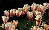 تصاویری زیبا از بهار کوتاه و زودگذر سیستان