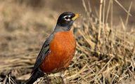 ۲۷ پرنده شکاری و عقاب به دلیل مسمومیت تلف شدند / تصاویر