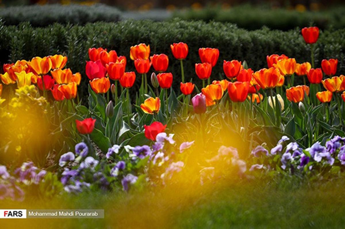 تصاویر زیبا از جشنواره گل لاله در کرج