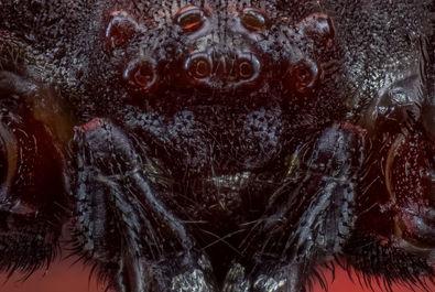 عکاسی باورنکردنی از صورت حشرات