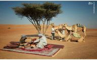 کسب درآمد از شتر و صحرا/ عکس
