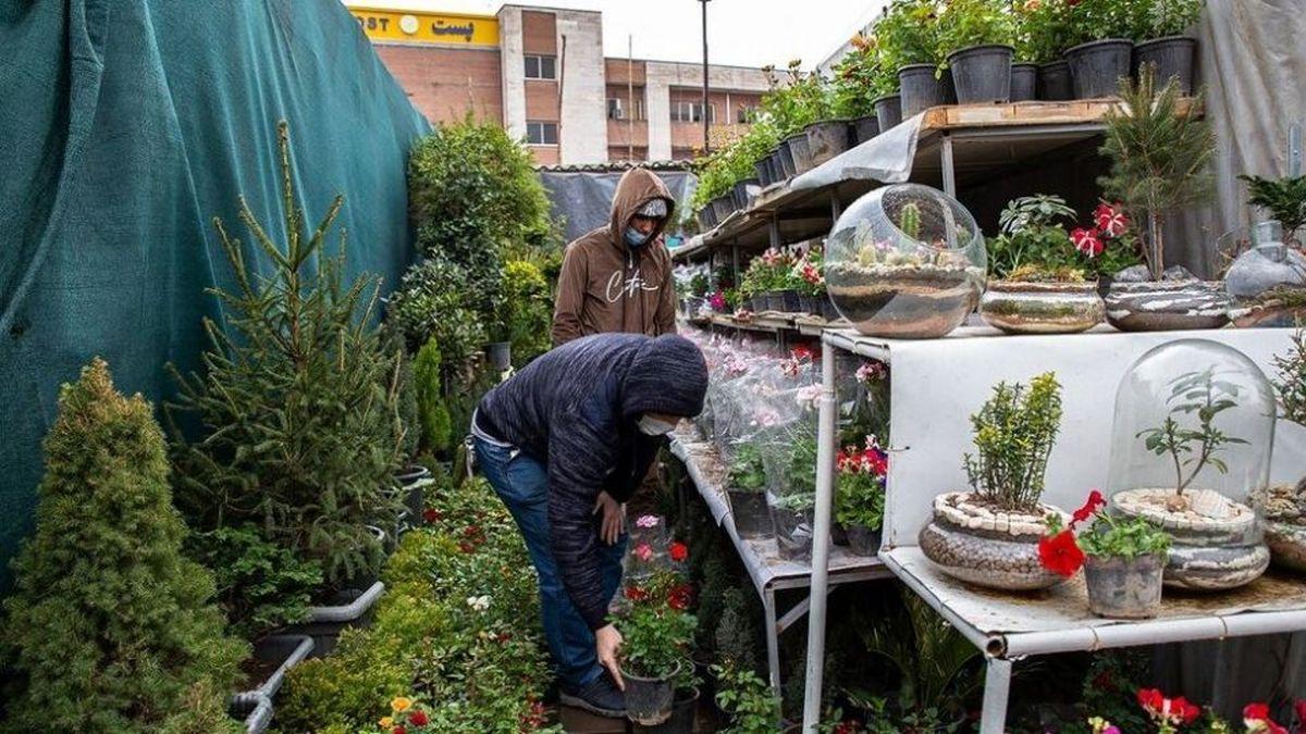 بازار گل محلاتی در تهران در آستانه سال نو+عکس ها