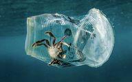 عاقبت زباله ریختن در طبیعت/عکس
