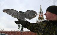 این پرنده ها از کاخ پوتین محافظت می کنند /تصاویر