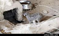 در باغ وحش تهران چه خبر است/ تصاویر