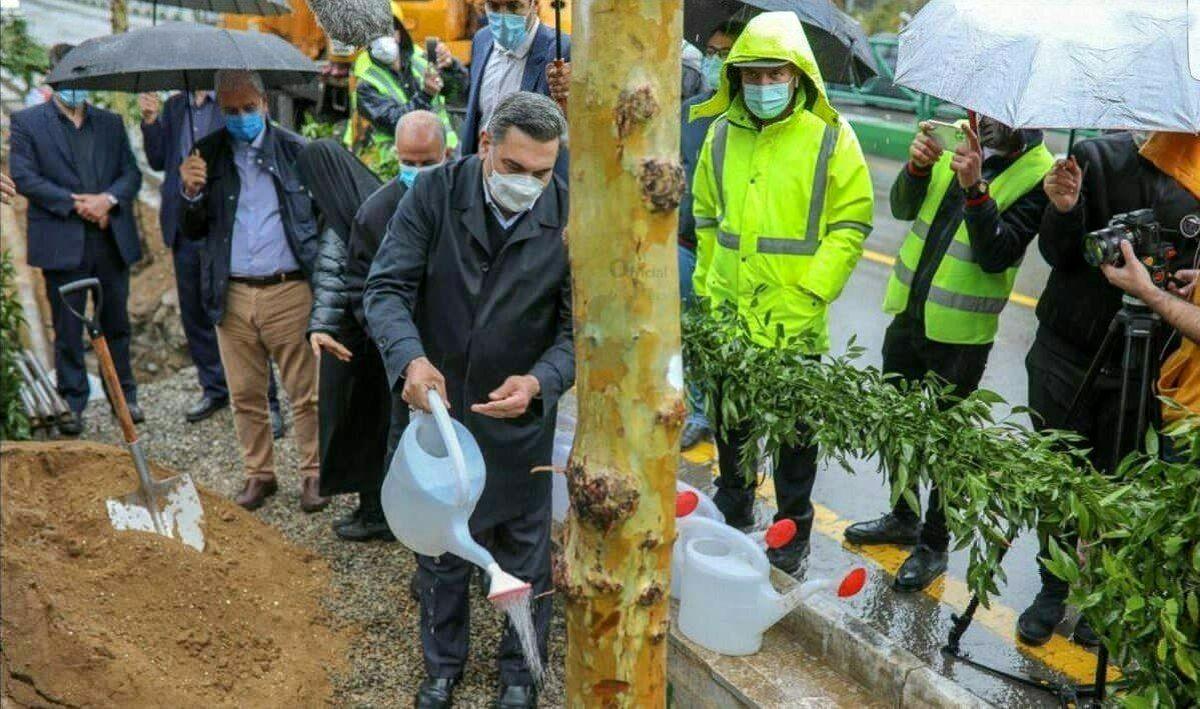 عکس جنجالی شهردار تهران؛ آبیاری درختان زیر باران