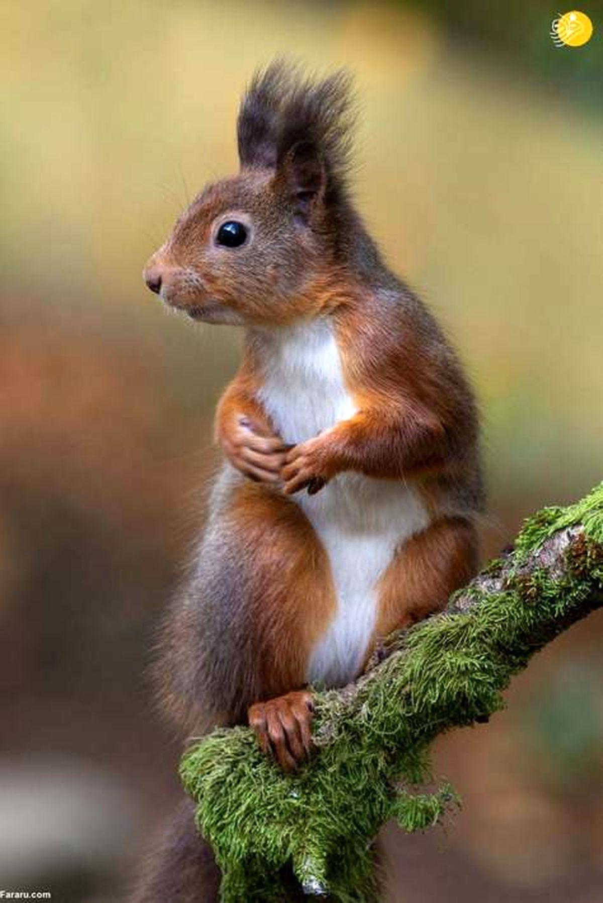 تصاویر خیره کننده از مسابقه عکاسی از پستانداران در سال ۲۰۲۱