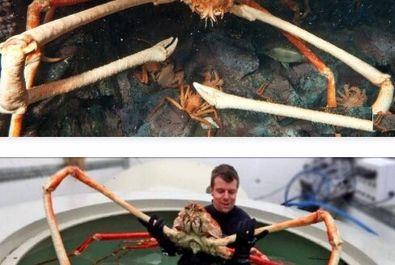 عجیبترین جانوران کره زمین