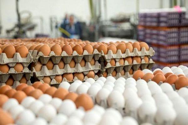 آخرین قیمت تخم مرغ در میادین تره بار (۱۴۰۰/۰۲/۱۹)+ جدول