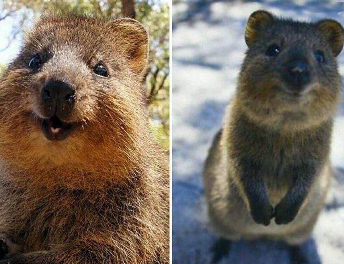 تصاویر شادترین حیوان روی زمین