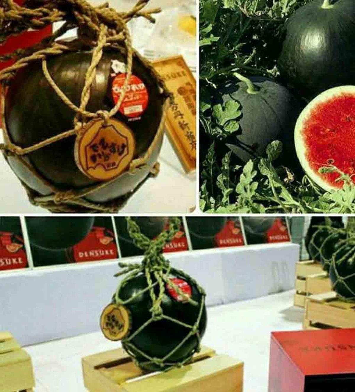 بهترین هندوانه دنیا به قیمت 6 هزار دلار