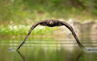 عکس فوق العاده زیبا از پرواز زیبای عقاب