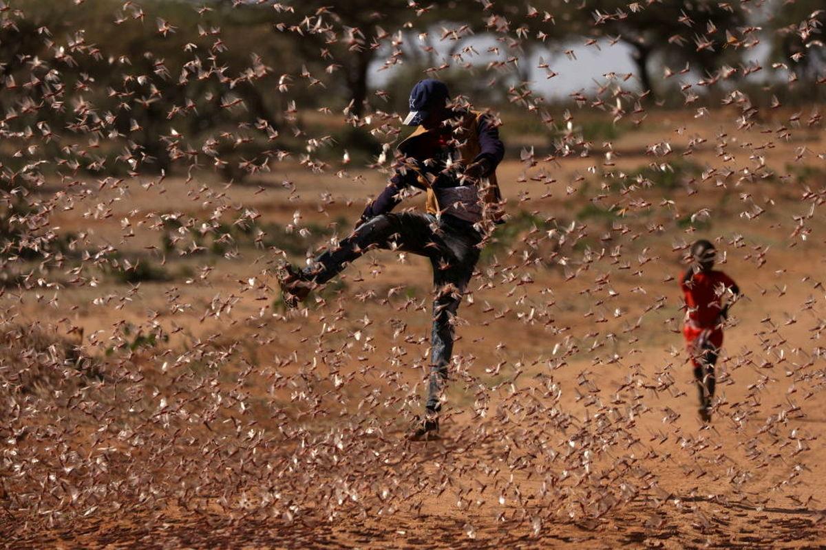 عکس خفن از حمله ملخ ها در کنیا