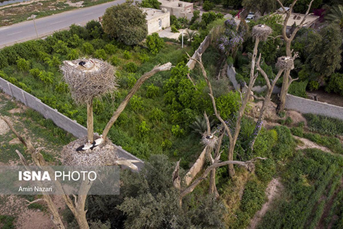 تصاویر زیبا از باغ لکلکها در فصل بهار