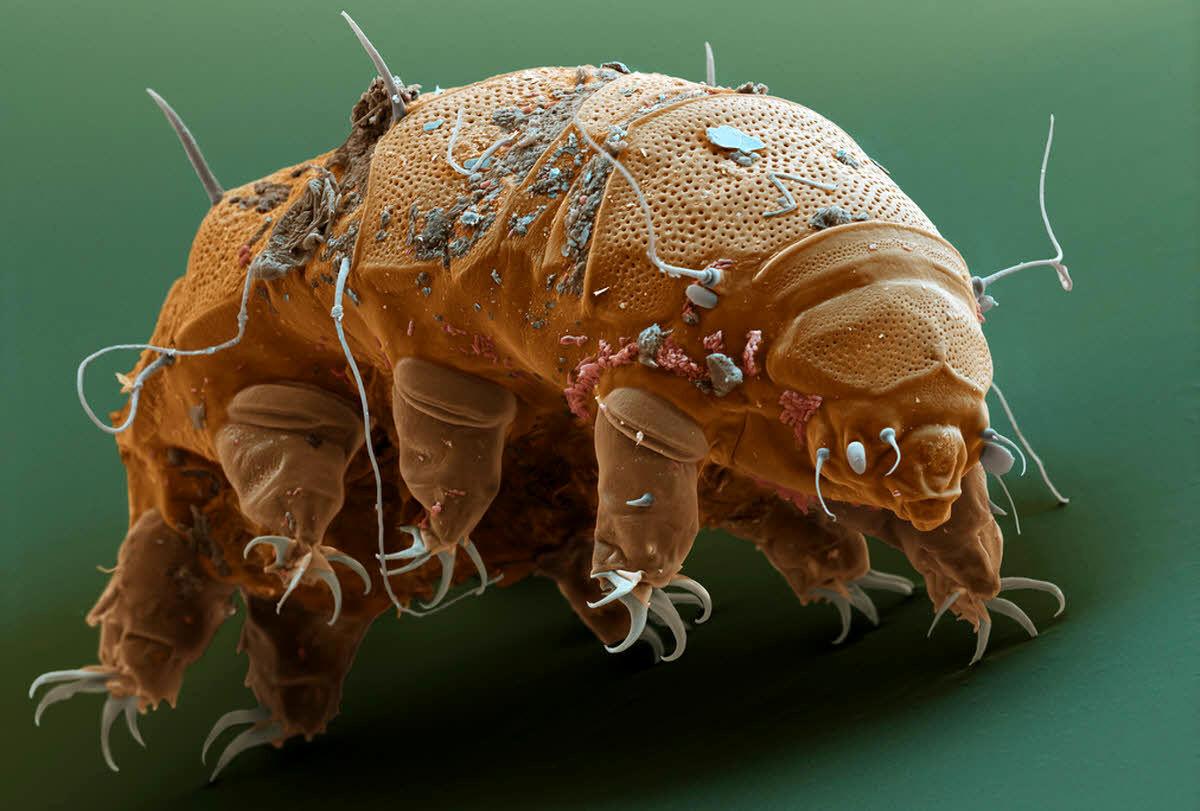 تصویری دیده نشده از تنها جانداری که میتواند در فضا به زندگی ادامه بدهد
