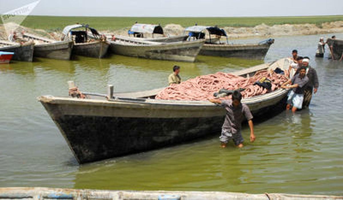 تصاویر جذاب از بسته بندی ماهی خاویار در استان گلستان